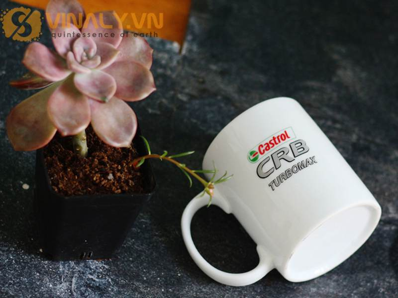 Ly sứ trắng trụ Vinaly cao cấp in logo Castrol