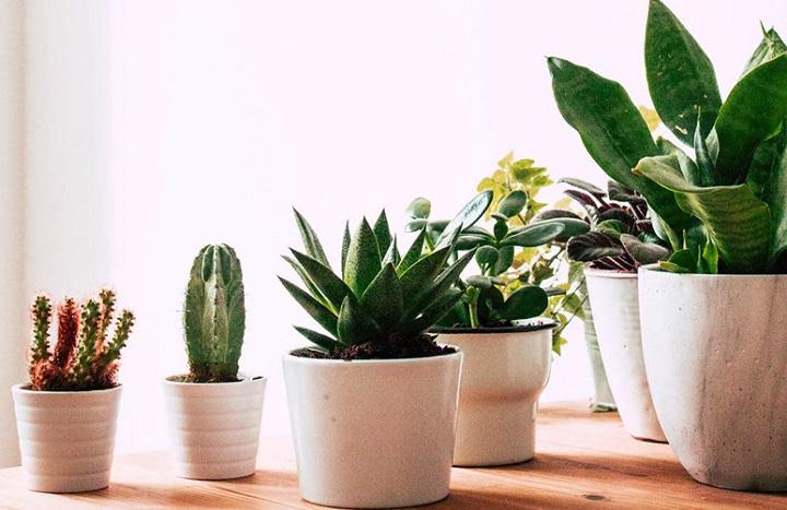 Chậu cây xanh - Quà tặng doanh nghiệp độc đáo
